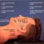 Introducción: posición general del cuerpo, preparación, planos y referencias cutáneas