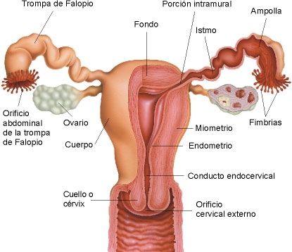 aparato reproductor femenino imagen diagnóstica y enfermería